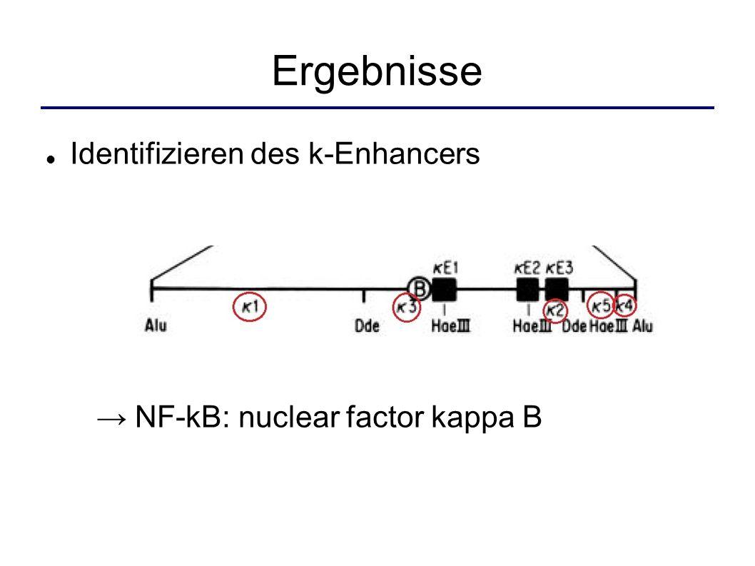Ergebnisse Identifizieren des k-Enhancers