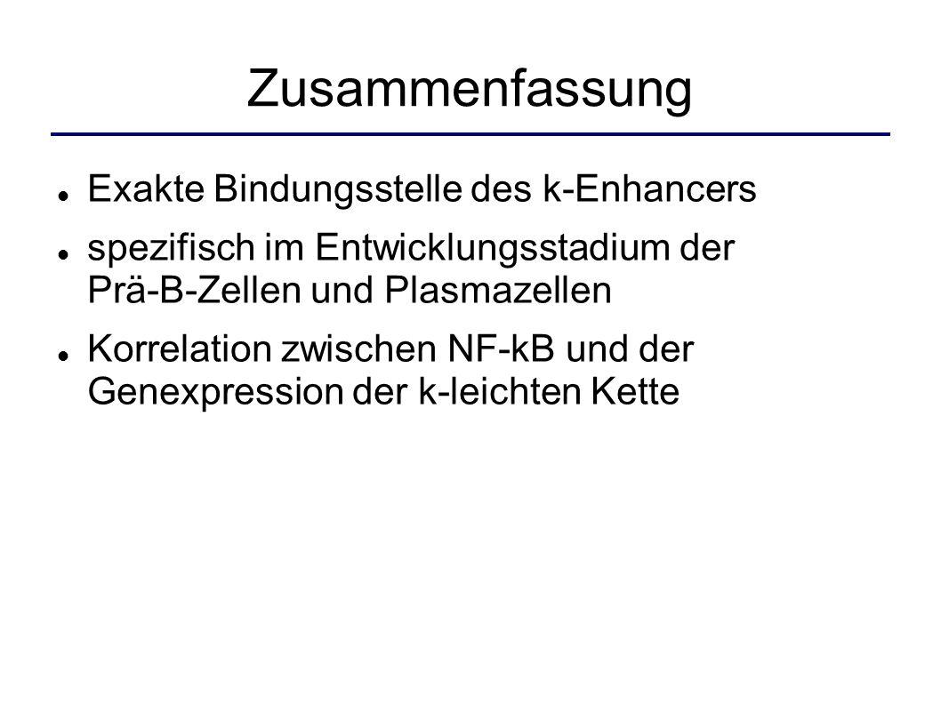 Zusammenfassung Exakte Bindungsstelle des k-Enhancers
