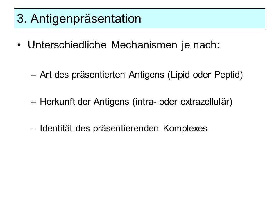3. Antigenpräsentation Unterschiedliche Mechanismen je nach: