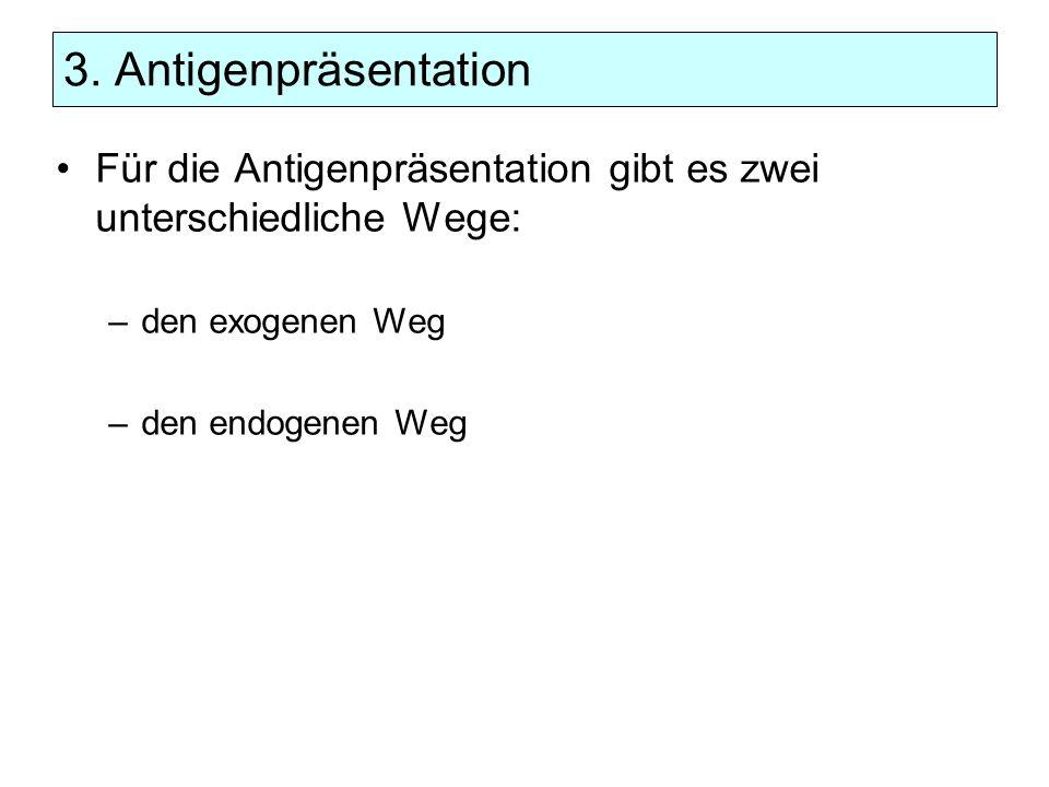 3. Antigenpräsentation Für die Antigenpräsentation gibt es zwei unterschiedliche Wege: den exogenen Weg.