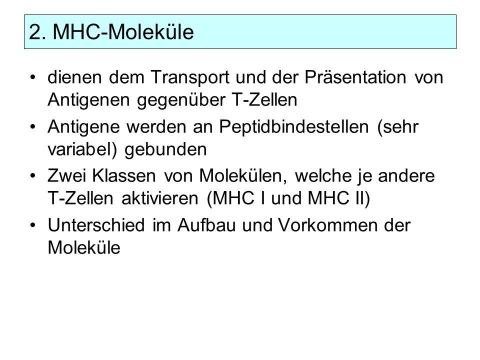 2. MHC-Moleküle dienen dem Transport und der Präsentation von Antigenen gegenüber T-Zellen.