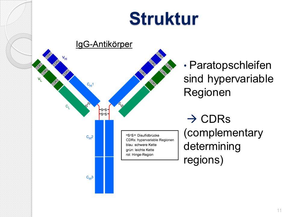 Struktur  CDRs (complementary determining regions)