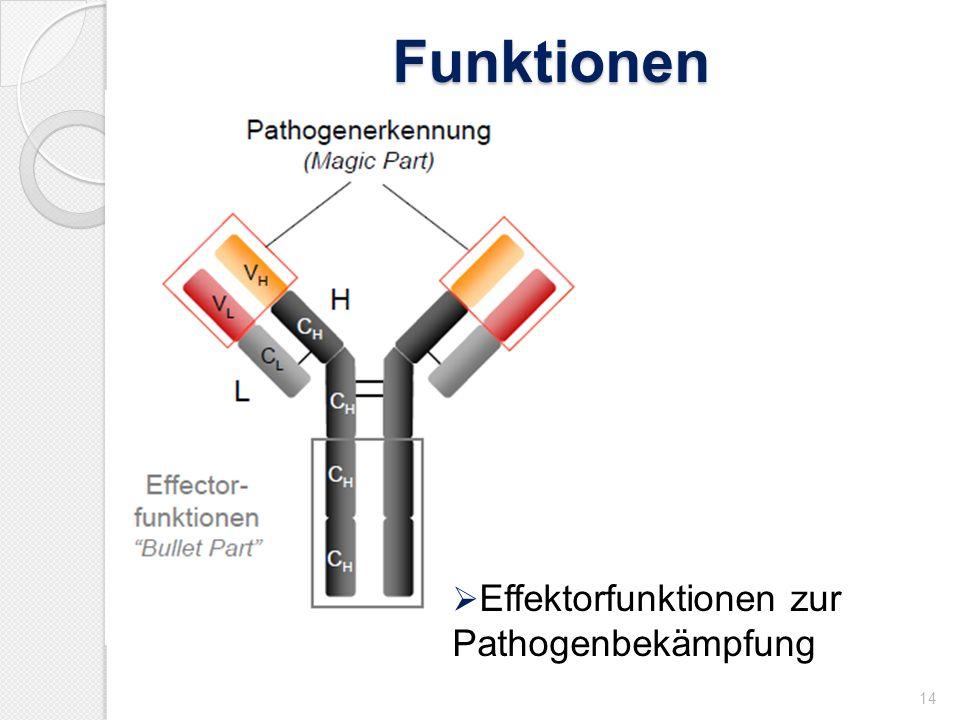 Funktionen Effektorfunktionen zur Pathogenbekämpfung