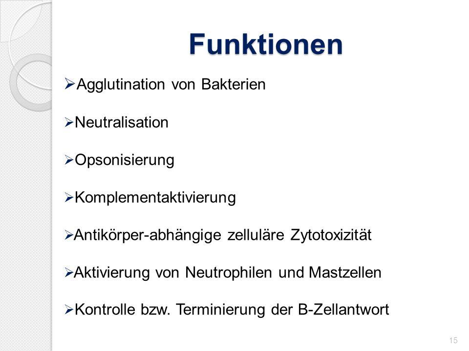 Funktionen Agglutination von Bakterien Neutralisation Opsonisierung