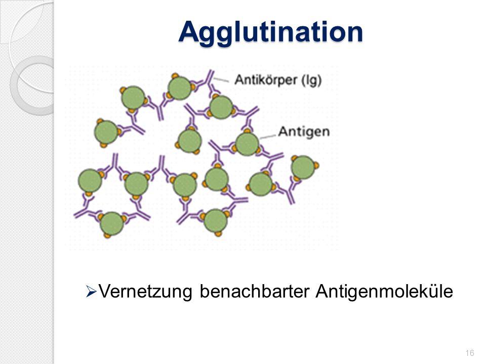 Agglutination Vernetzung benachbarter Antigenmoleküle