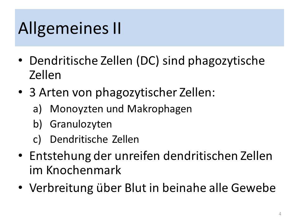 Allgemeines II Dendritische Zellen (DC) sind phagozytische Zellen
