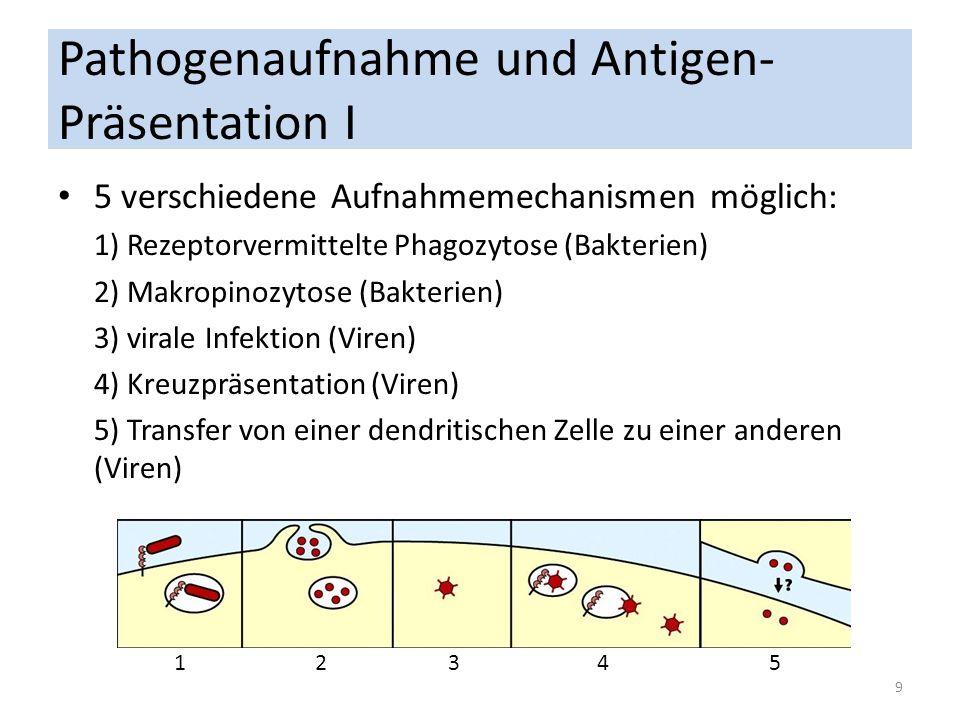 Pathogenaufnahme und Antigen-Präsentation I