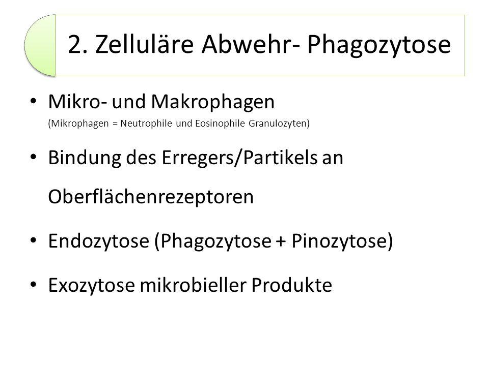2. Zelluläre Abwehr- Phagozytose