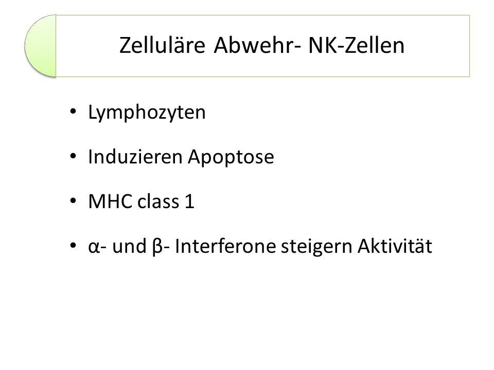 Zelluläre Abwehr- NK-Zellen