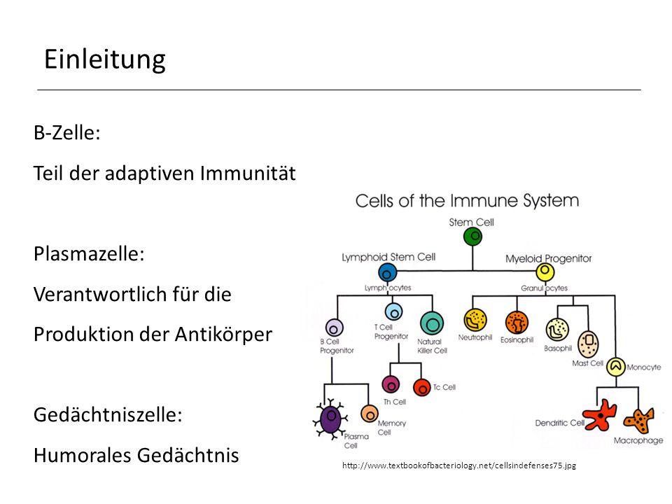 Einleitung B-Zelle: Teil der adaptiven Immunität Plasmazelle: