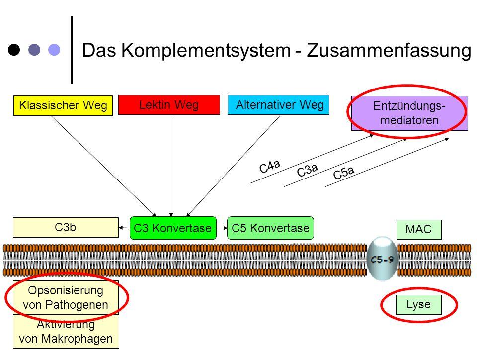 Das Komplementsystem - Zusammenfassung