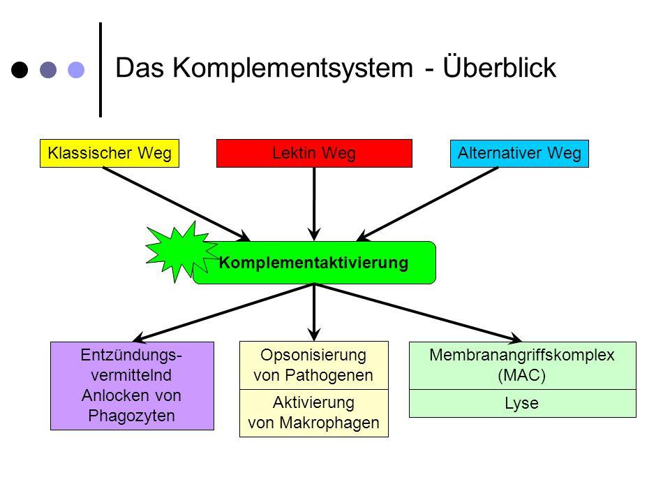 Komplementaktivierung