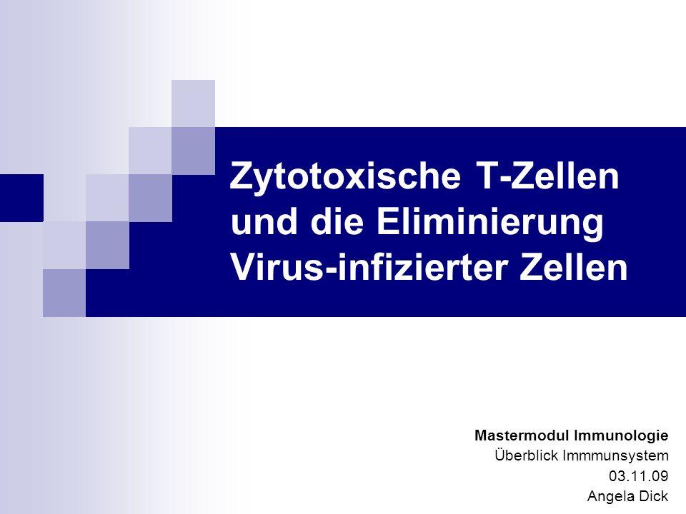 Zytotoxische T-Zellen und die Eliminierung Virus-infizierter Zellen