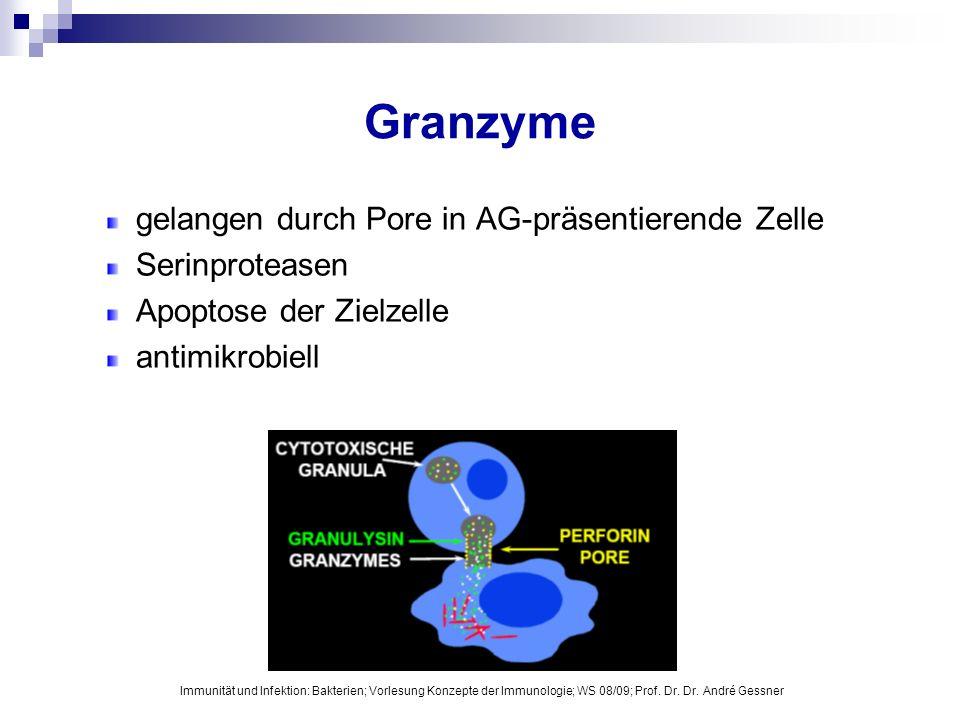 Granzyme gelangen durch Pore in AG-präsentierende Zelle Serinproteasen
