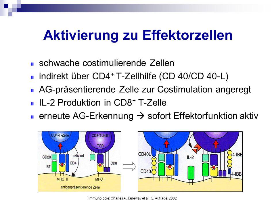 Aktivierung zu Effektorzellen