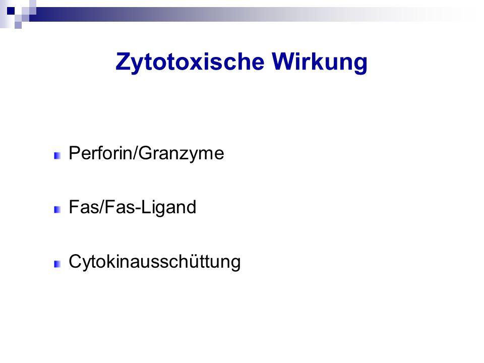 Zytotoxische Wirkung Perforin/Granzyme Fas/Fas-Ligand
