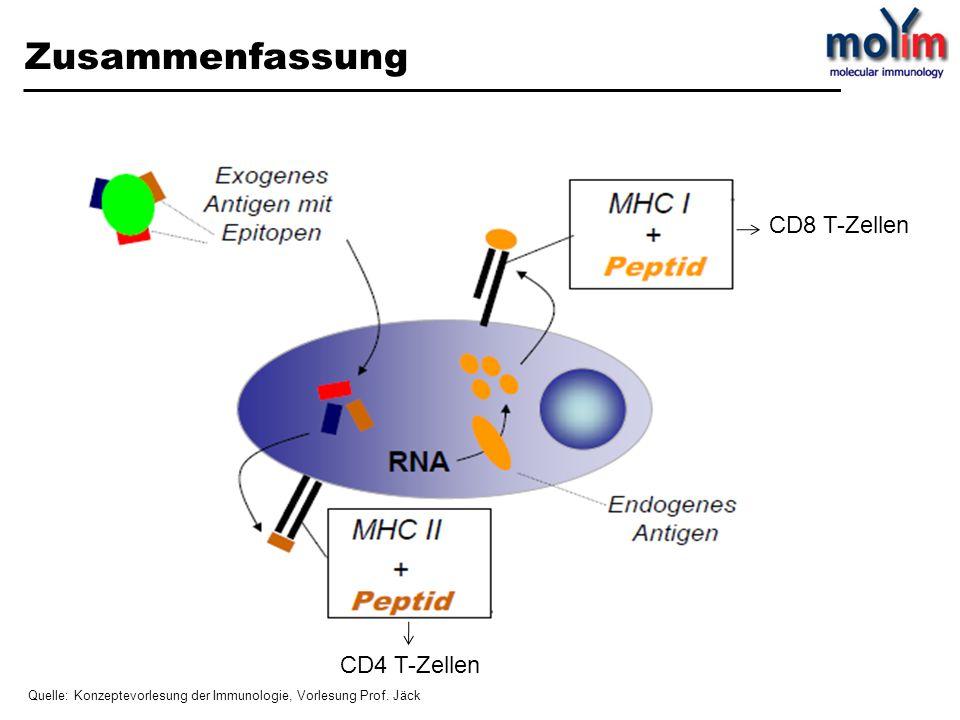 Zusammenfassung CD8 T-Zellen CD4 T-Zellen