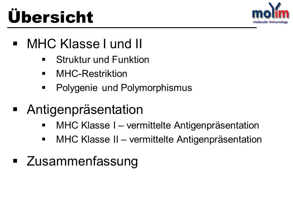 Übersicht MHC Klasse I und II Antigenpräsentation Zusammenfassung