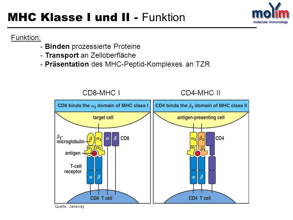MHC Klasse I und II - Funktion