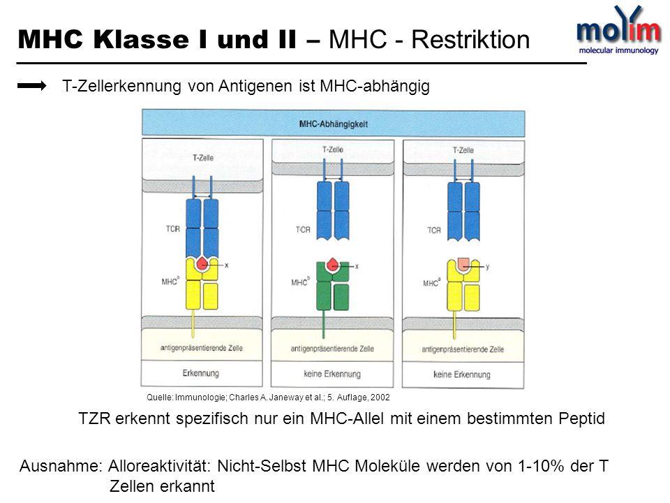 MHC Klasse I und II – MHC - Restriktion