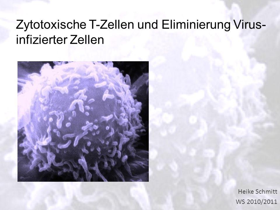 Zytotoxische T-Zellen und Eliminierung Virus- infizierter Zellen
