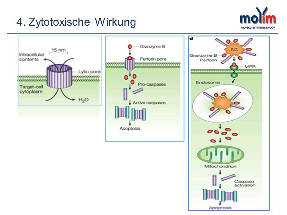 4. Zytotoxische Wirkung