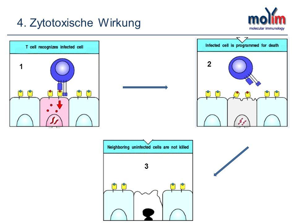 4. Zytotoxische Wirkung 2 1 2 3