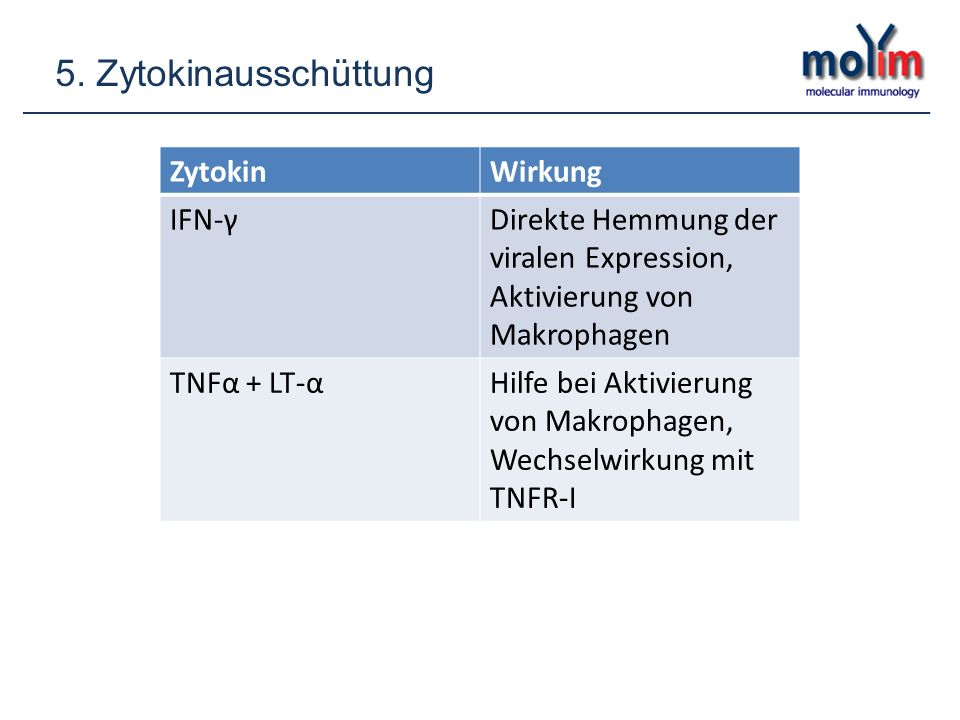 5. Zytokinausschüttung Zytokin Wirkung IFN-γ