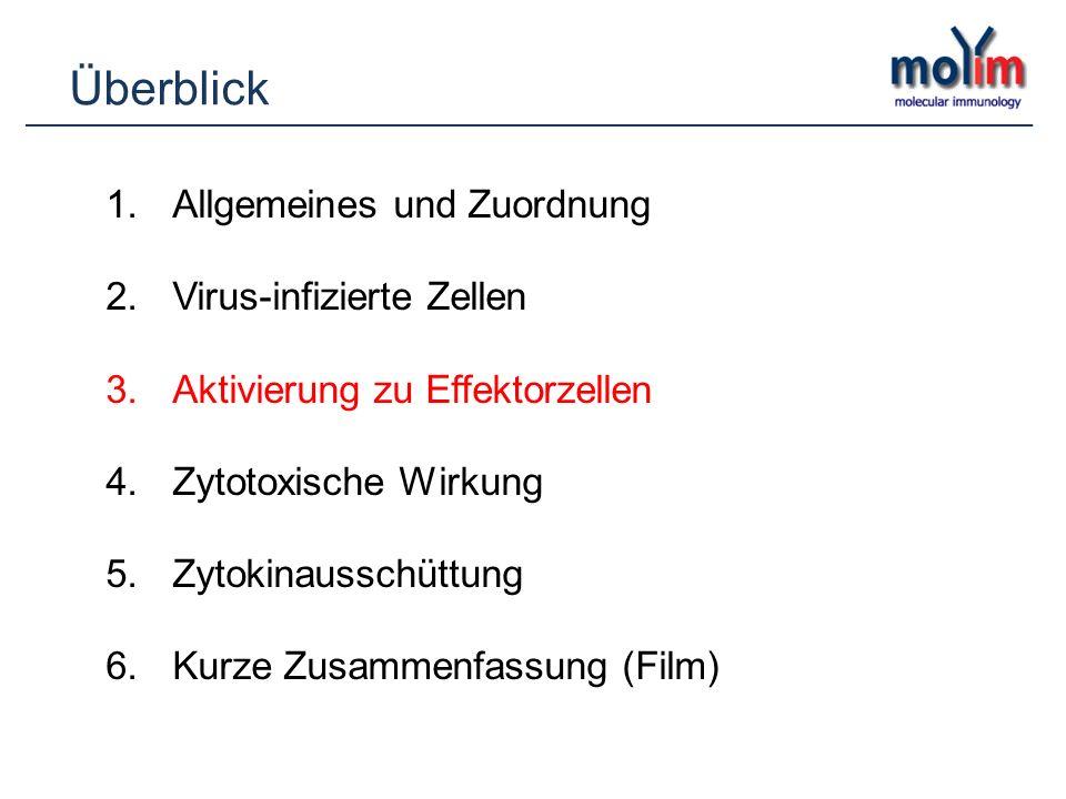 Überblick Allgemeines und Zuordnung Virus-infizierte Zellen