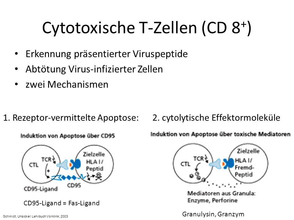Cytotoxische T-Zellen (CD 8+)