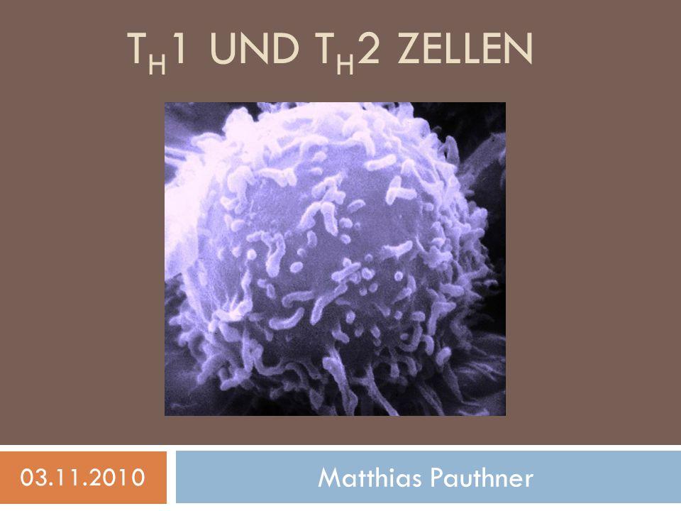 TH1 und Th2 Zellen 03.11.2010 Matthias Pauthner