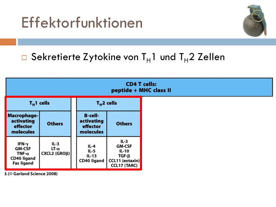 Effektorfunktionen Sekretierte Zytokine von TH1 und TH2 Zellen