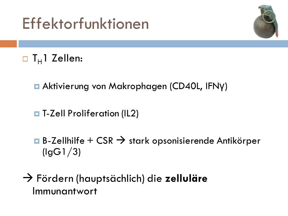 Effektorfunktionen TH1 Zellen: