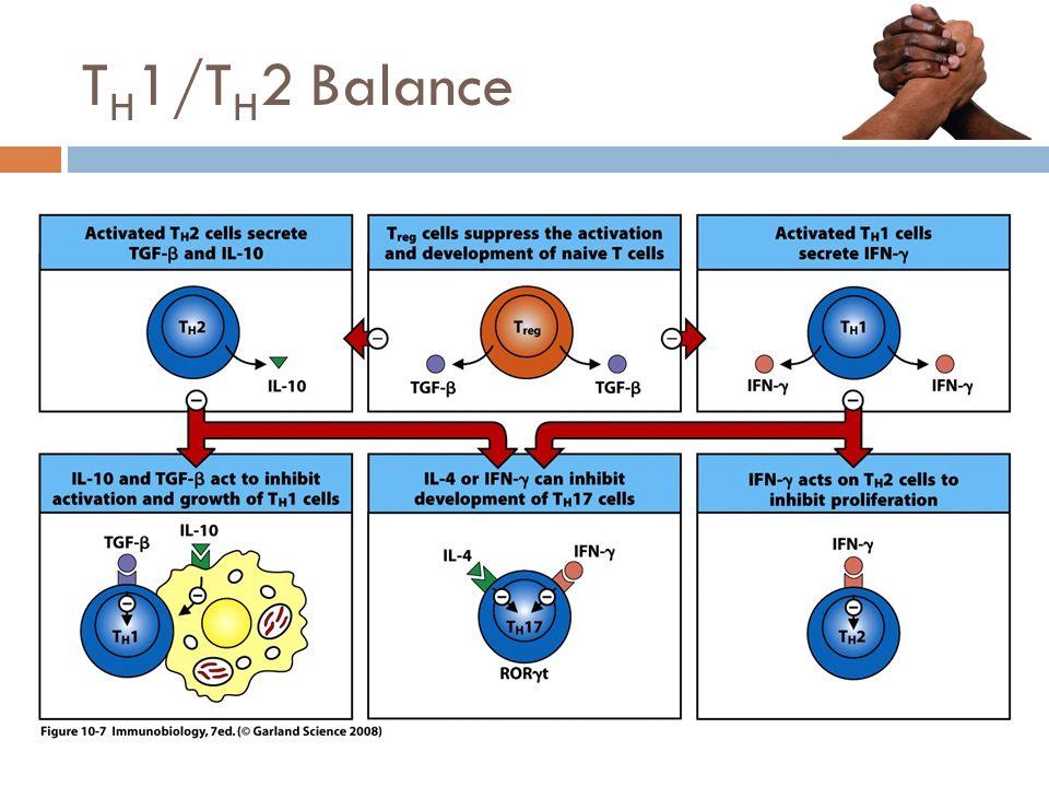TH1/TH2 Balance