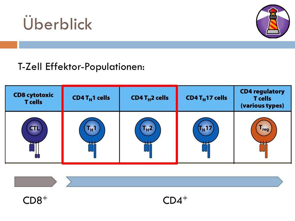 Überblick T-Zell Effektor-Populationen: CD8+ CD4+