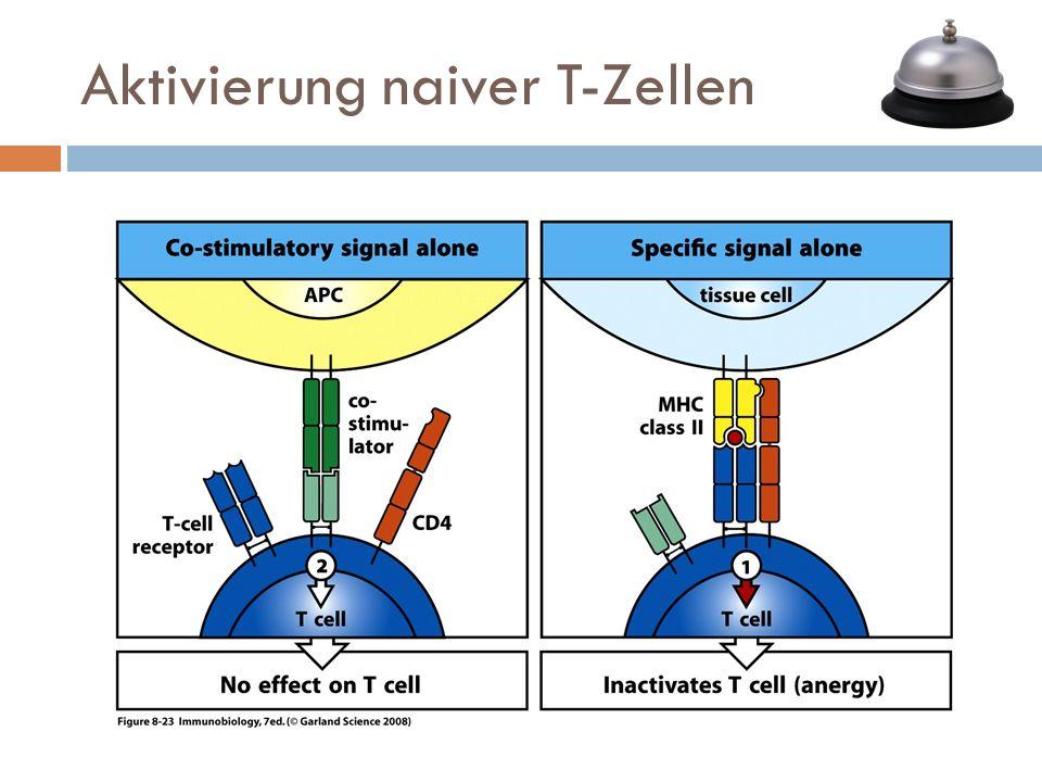 Aktivierung naiver T-Zellen