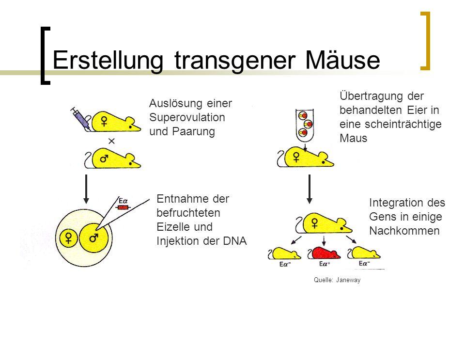Erstellung transgener Mäuse