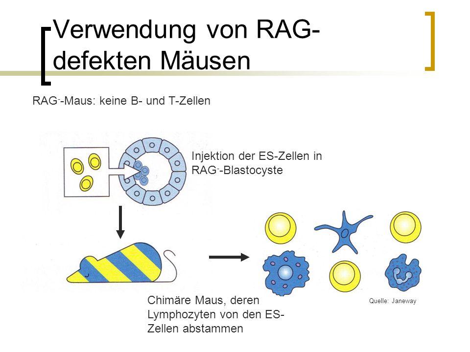 Verwendung von RAG-defekten Mäusen