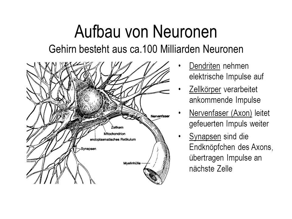 Aufbau von Neuronen Gehirn besteht aus ca.100 Milliarden Neuronen
