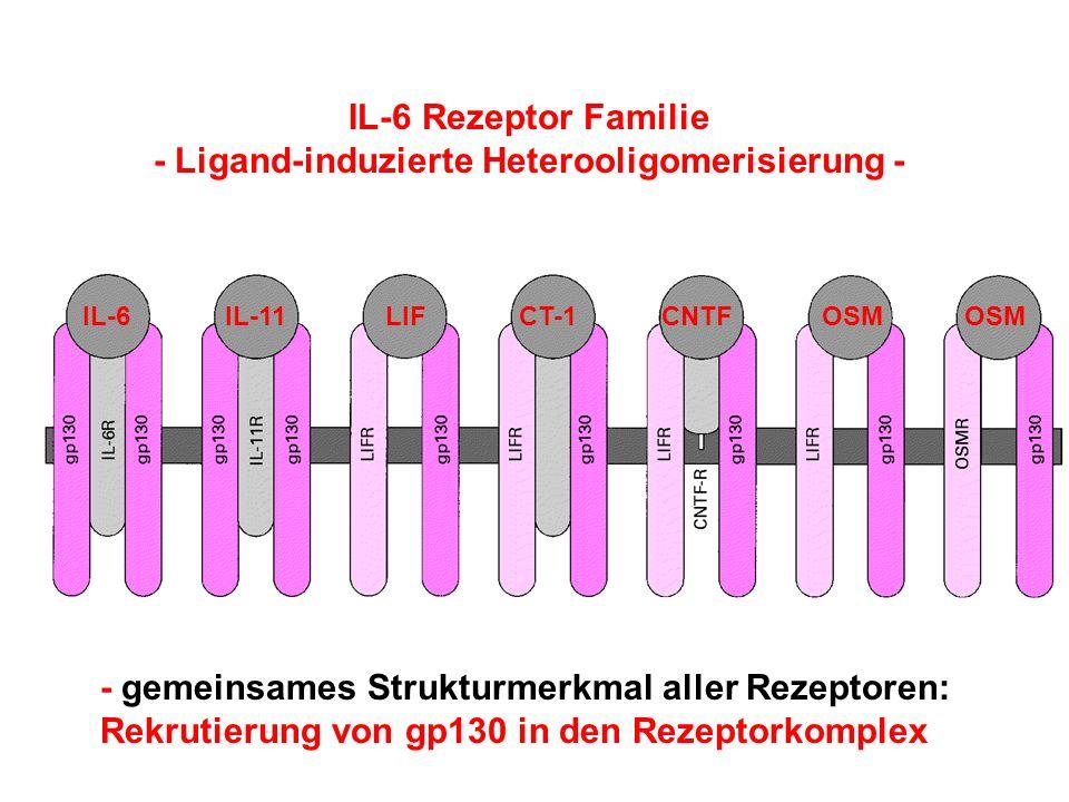 - Ligand-induzierte Heterooligomerisierung -