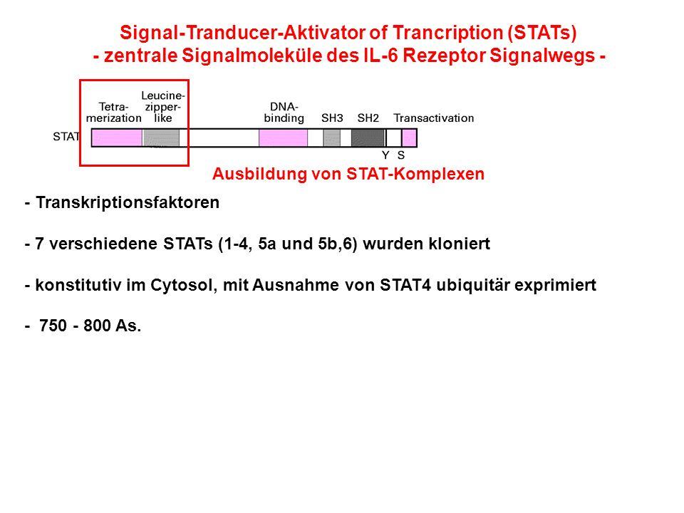 Signal-Tranducer-Aktivator of Trancription (STATs)