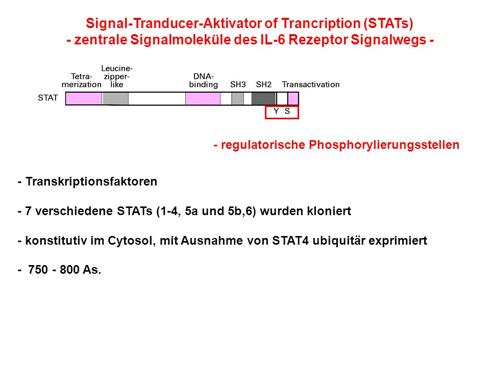 Signal-Tranducer-Aktivator of Trancription (STATs)