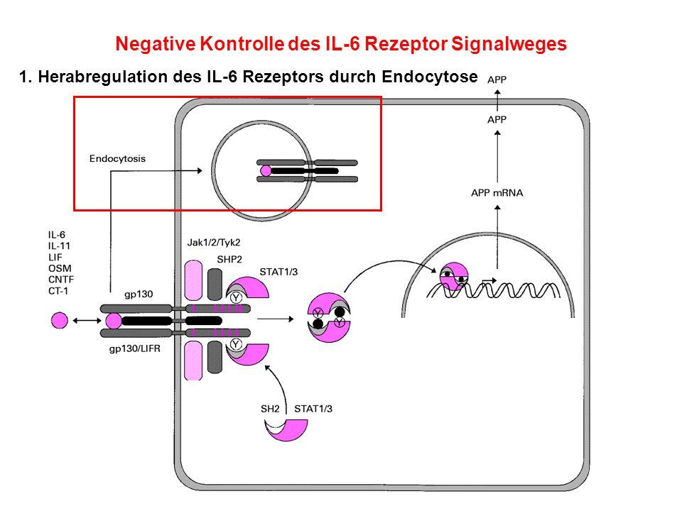 Negative Kontrolle des IL-6 Rezeptor Signalweges
