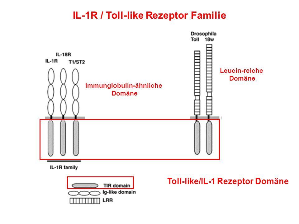 Immunglobulin-ähnliche
