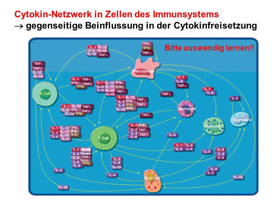 Cytokin-Netzwerk in Zellen des Immunsystems