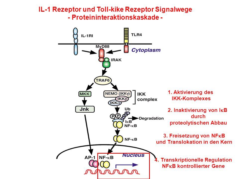 IL-1 Rezeptor und Toll-kike Rezeptor Signalwege