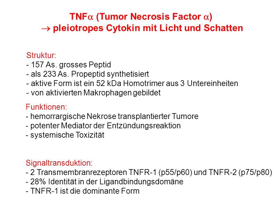 TNFa (Tumor Necrosis Factor a)