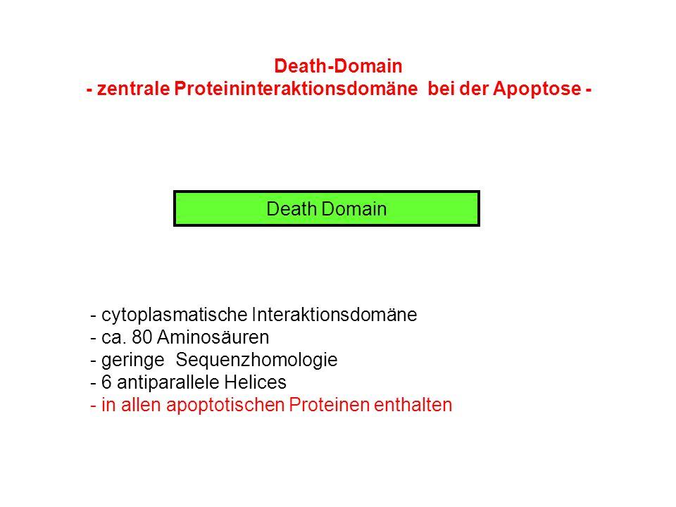 - zentrale Proteininteraktionsdomäne bei der Apoptose -