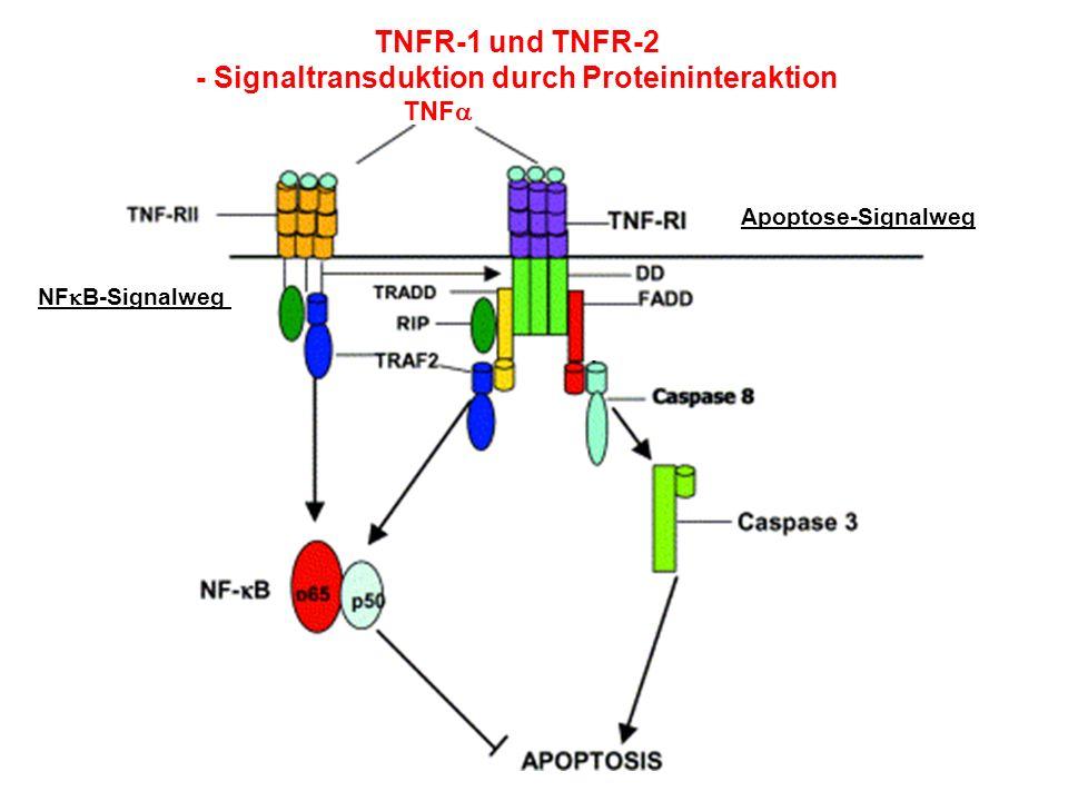 - Signaltransduktion durch Proteininteraktion