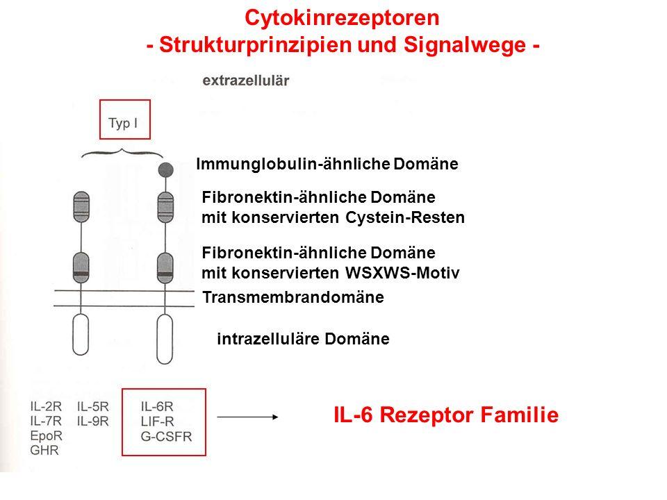 - Strukturprinzipien und Signalwege -